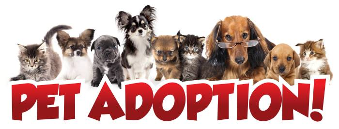 pet adoption_Broxton's