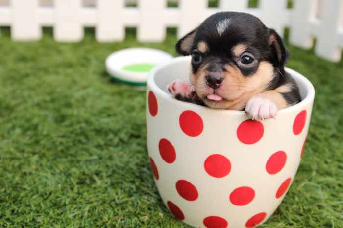 black and brown short haired puppy in cup