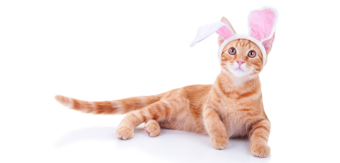 blog_top-four-easter-hazards-for-pets_032316_main.jpg